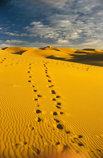 Stock Photo: 1606-15093 Morocco, south, Merzouga (Erfoud), desert, footprints in dunes, blue sky and white clouds