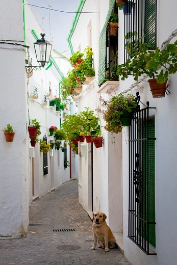 Stock Photo: 1606-166770 Spain, Andalusia, Cordoba province, Priego de Cordoba
