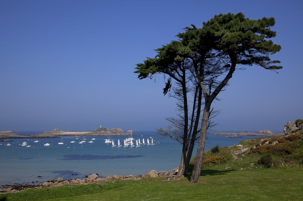 Stock Photo: 1606-171124 France, Cotes d' Armor, Perros Guirec, Port Blanc, pink granite coast, sailing boats, tree first plan