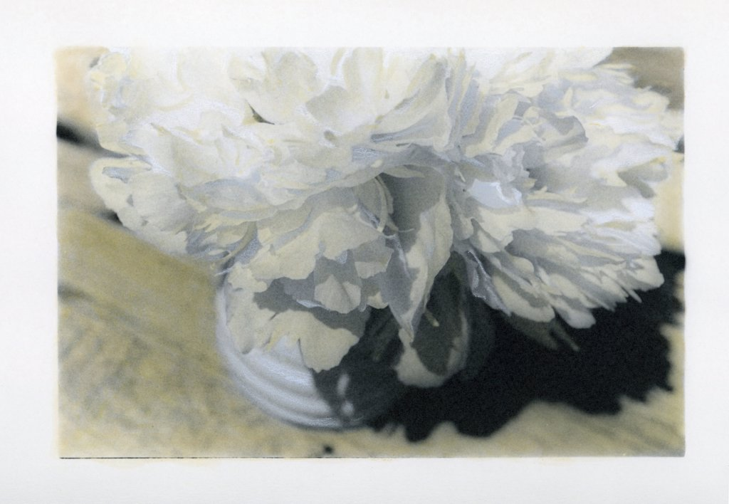 Painted photograph of a peony bouquet on photographic barite paper : Stock Photo