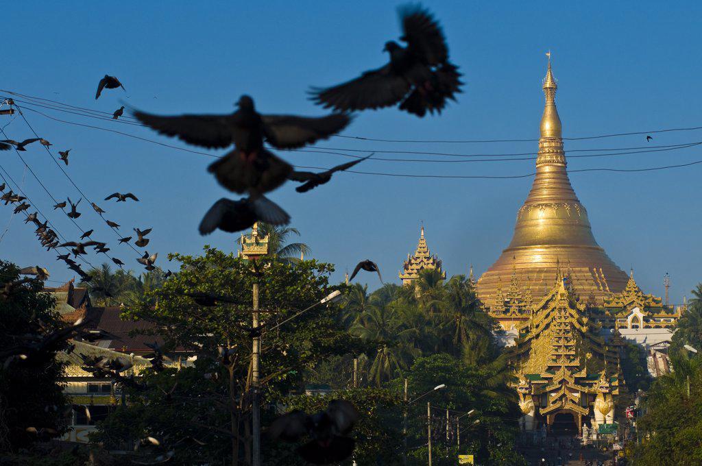 Myanmar (Burma), Yangon State, Yangon, Kandawgyi Quarter, Gabaraye Pagoda avenue, east entrance of Shwedagon Pagoda, pilgrims can buy food to give it to the numerous pigeons around the pagoda : Stock Photo