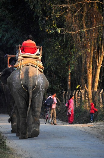 Stock Photo: 1606-179385 Nepal, Chitwan National Park, tourists having an elephant ride in the park