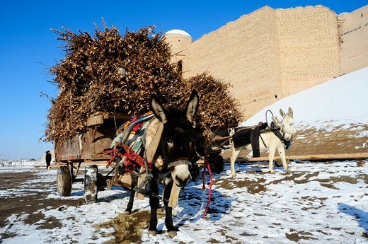 Stock Photo: 1606-179834 /UZBEKISTAN KHIVA 2 donkeys are pulling a cart full of wood