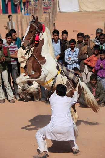Stock Photo: 1606-180307 India, Rajasthan, Nagaur, Fair, horse dancing,
