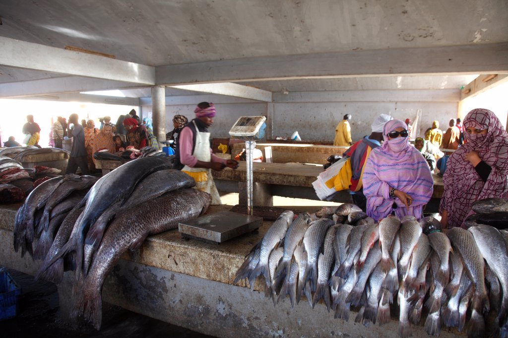 Africa (west africa), Mauritania, Nouakchott, fishermen beach, fish market : Stock Photo