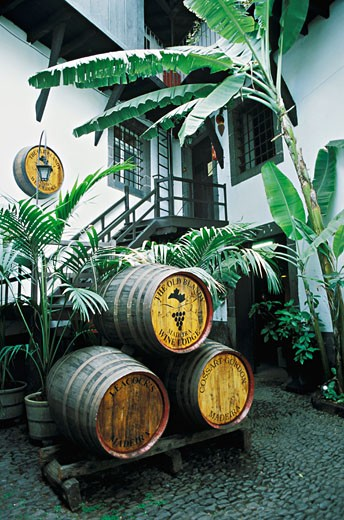 Portugal, Madeira, Funchal, Madeira wine barrels : Stock Photo