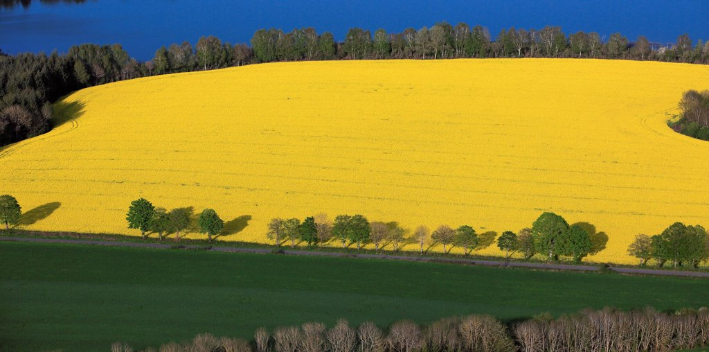 Stock Photo: 1606-185975 France, Aveyron (12), Landscape of crop with canola field in bloom, (aerial photo,