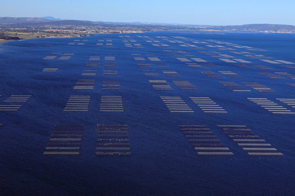 France, Hérault (34), Etang de Thau, site production of oysters and mussels (aerial photo), : Stock Photo