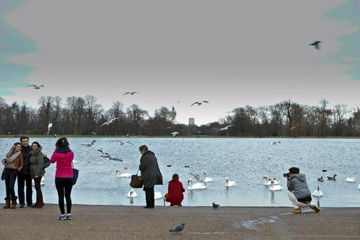 Stock Photo: 1606-193385 England, London, Kensington Garden, People Taking Photos And Swans On The Lake