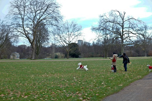 England, London, Couple Playing With Their Dogs In Kensington Garden : Stock Photo