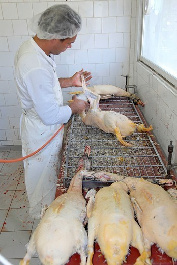 France, Pyrenees Orientales, A Worker In A Foie Gras Cannery : Stock Photo