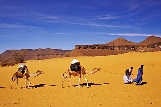 Stock Photo: 1606-20732 Mauritania, Adra plateau, camel drivers with 2 animals