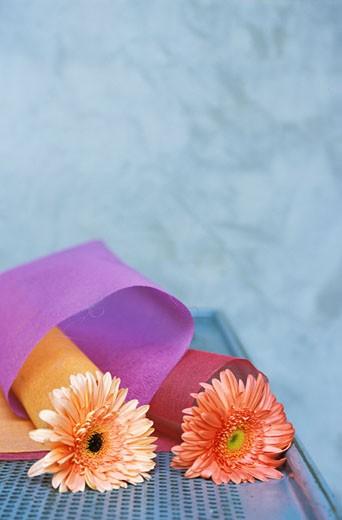 Gros plan sur 2 gerberas orange dans étuis en tissu mauve et rouge sur plan de travail en fer à trous : Stock Photo