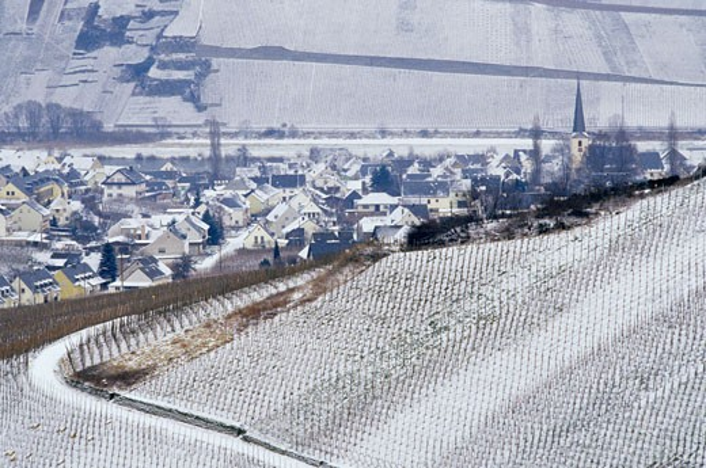 Germany, Rhinland-Palatinate, Leiwen in winter, vineyards : Stock Photo