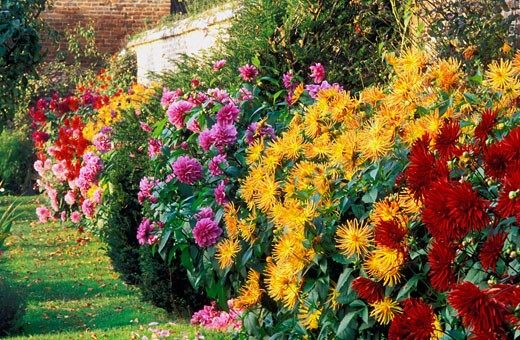 Stock Photo: 1606-22709 Paris, quartier Miromesnil, jardin en été, gros plan sur massif de dahlias multicolores, pelouse