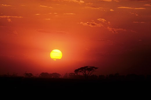 Kenya, sunset in the Ambroseli reserve : Stock Photo