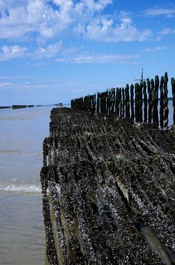 Stock Photo: 1606-25138 France, Brittany, Ille-et-Vilaine,