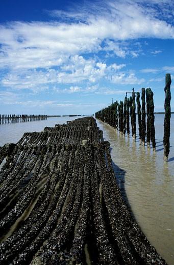 Stock Photo: 1606-25147 France, Brittany, Ille-et-Vilaine,
