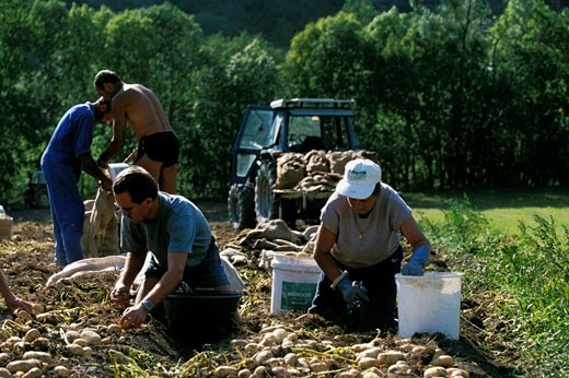 Stock Photo: 1606-25160 France, Provence-Alpes-Côte d'Azur, Alpes de Haute Provence,