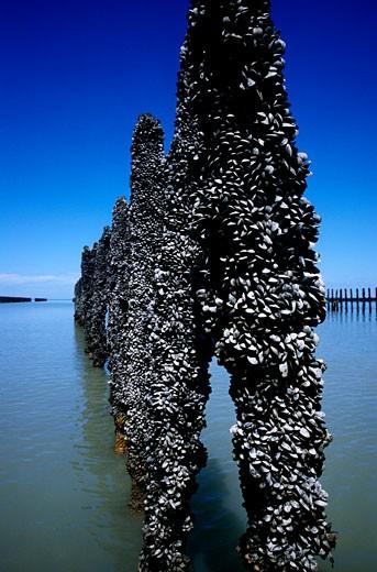 France, Brittany, Ille-et-Vilaine, : Stock Photo