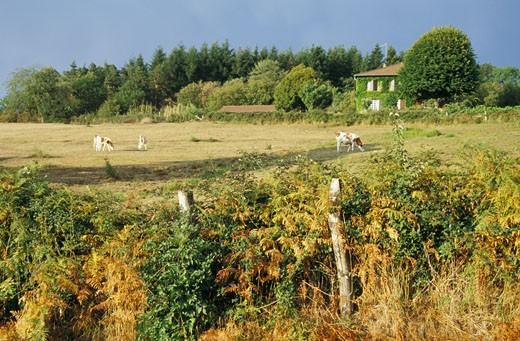 Stock Photo: 1606-25765 France, Rhône-Alpes, Loire,