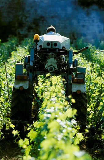 France, Burgundy, Saône et Loire, Vinzelles, tractor in green vineyards : Stock Photo