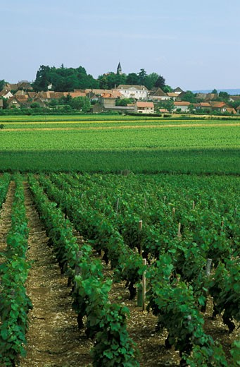 Stock Photo: 1606-31819 France, Burgundy, Saône et Loire, overall view of Jully les Buxy, vineyards in the foreground