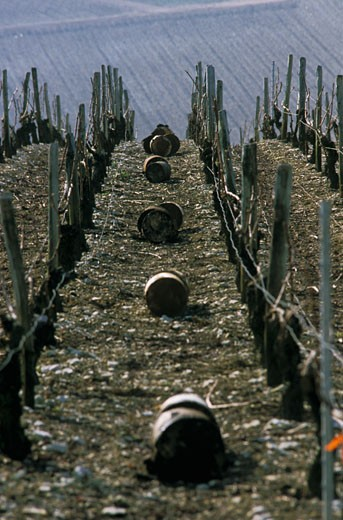 France, Burgundy, Yonne, Chablis, to heat when frozing : Stock Photo