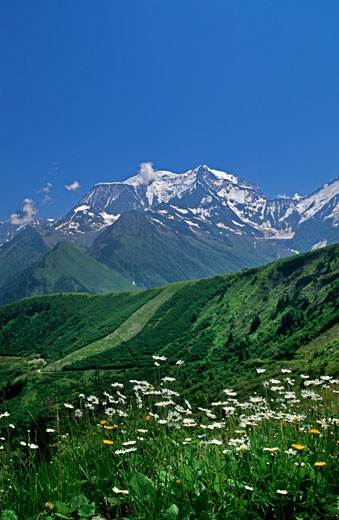 Stock Photo: 1606-34856 France, Rhônes-Alpes, Haute Savoie, Mont Blanc, meadow