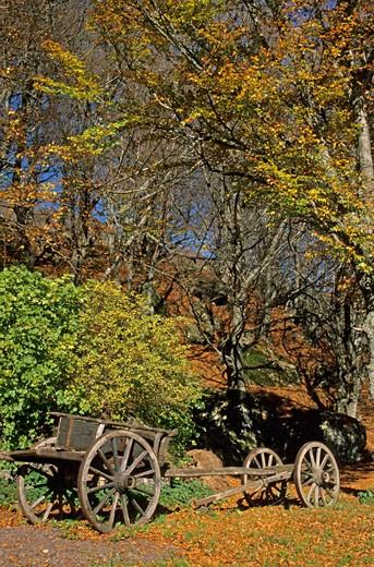 France, Auvergne, Puy-de-Dôme, old cart, dead leaves : Stock Photo