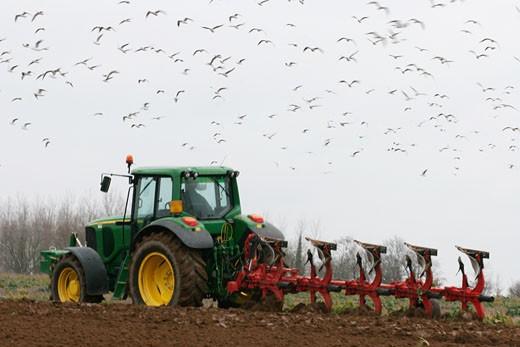 Stock Photo: 1606-36294 France, Pays de la Loire, Loire-Atlantique, Pays de Retz, tractor poughing, sea gulls