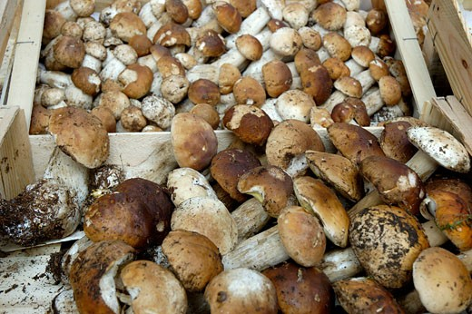 Close up on boletus from Corréze in crates : Stock Photo