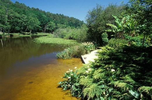 40. Pays de Born, lac d'Aureilhan; berge verdoyante : Stock Photo