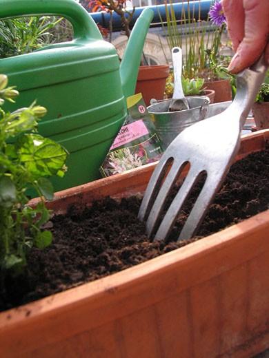 """IN*Gros plan sur main d'une femme travaillant la terre d'une jardinière avec """"fourchette"""", sur balcon, fleurs et plantes : Stock Photo"""