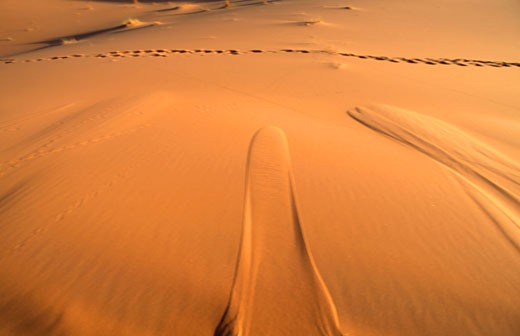 Stock Photo: 1606-44584 Morocco, Tafilalet  region, Merzouga dunes (Erg Chebbi)