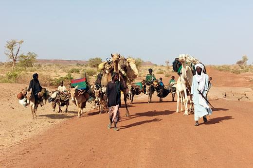 Niger, caravan in desert : Stock Photo