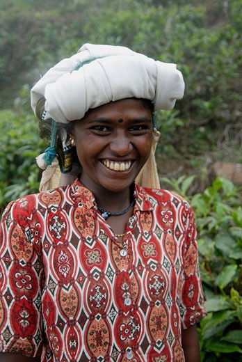 Stock Photo: 1606-52035 Sri Lanka, Nuwara Eliya, tea plantation, young smiling woman
