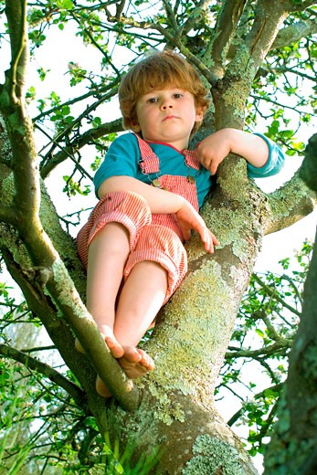 Stock Photo: 1606-54043 Little boy in a tree looking at camera