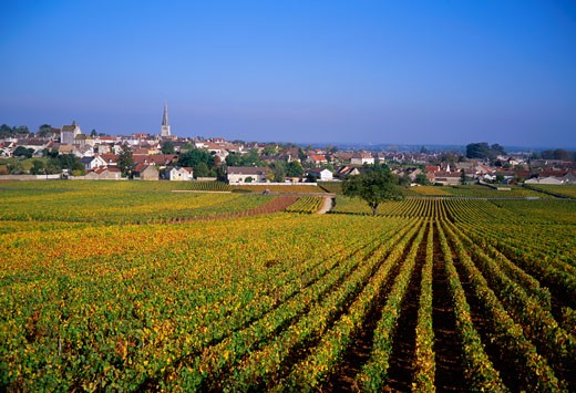 Stock Photo: 1606-54292 France, Burgundy, Côte-d'Or, Meursault and côtes de Beaune vineyard