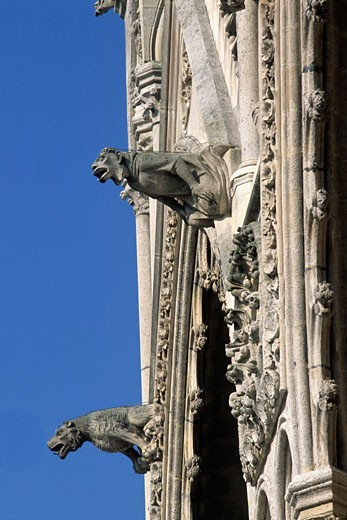 France, Picardie, Somme, Amiens, Amiens cathedral (13th century, Unesco World Heritage), gargoyles : Stock Photo