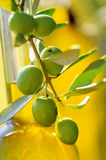 Bottle of olive oil and branch of olive tree : Stock Photo