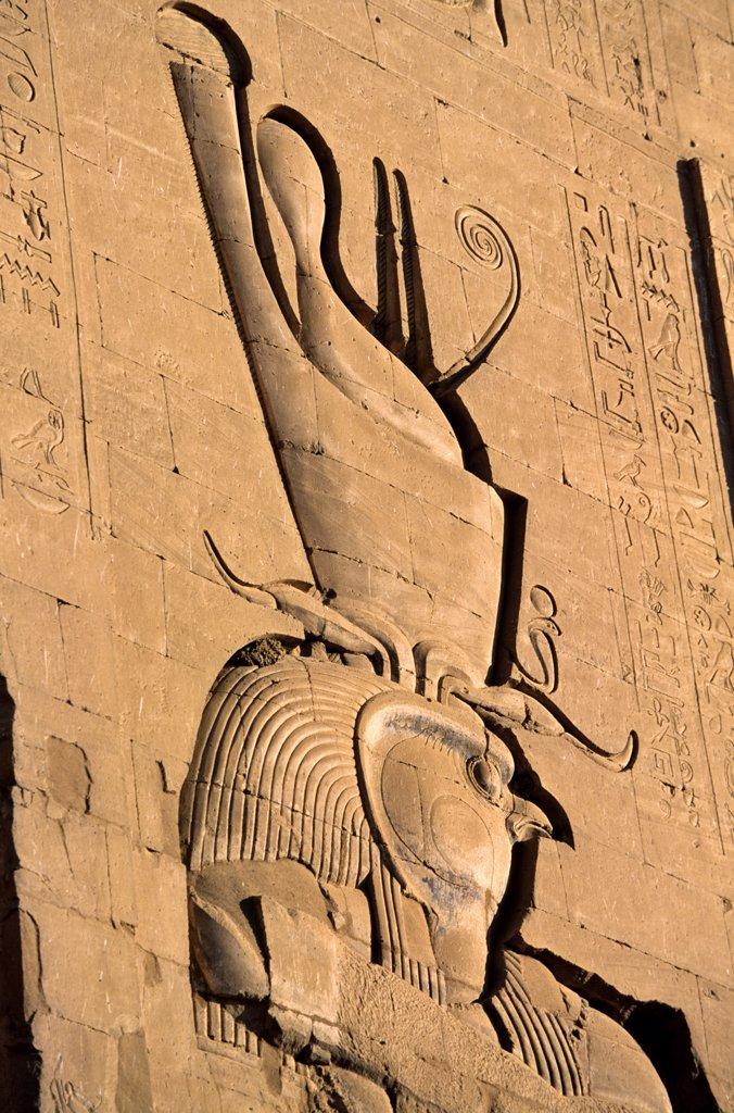 Egypt, Nubia, Edfou Horus temple, the falcon (Horus) : Stock Photo