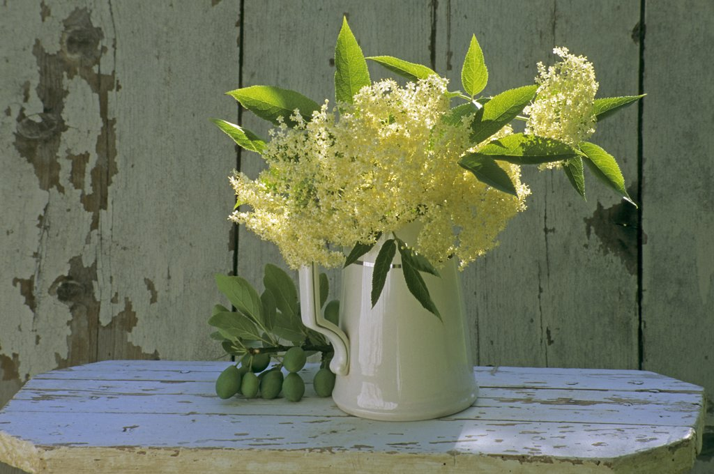 Stock Photo: 1606-64998 Elderberries bouquet