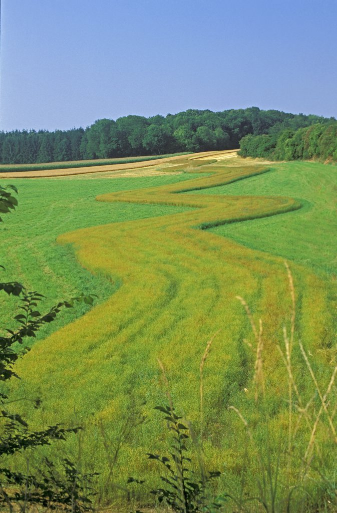 France, Picardie, Somme, flax field near Abbeville : Stock Photo