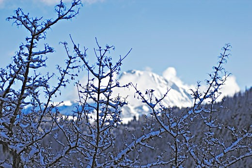 Stock Photo: 1606-69772 France, Rhone Alpes, Haute Savoie, Le Biot, landscape in winter, snowed branches