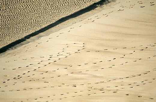 Stock Photo: 1606-76829 France, Normandy, Manche, Cotentin, footprints on the beach