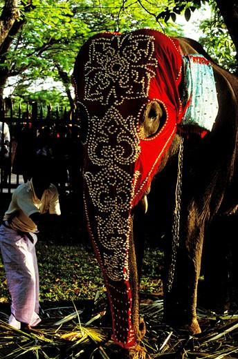 Stock Photo: 1606-76997 Sri lanka, Colombo, Perahera ceremony