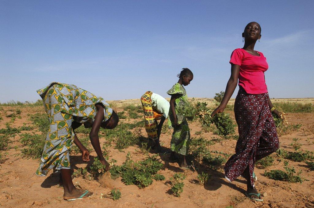 Mauritanie, Guidimakha, Boully, Women harvesting nuts : Stock Photo