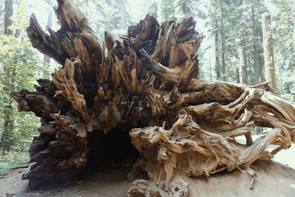 US, California, Sequoia national park : Stock Photo