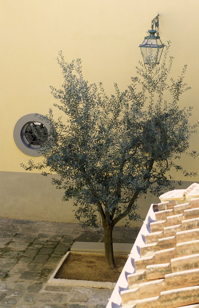 Stock Photo: 1606-81273 Italy, Tuscany, little tree in a courtyard
